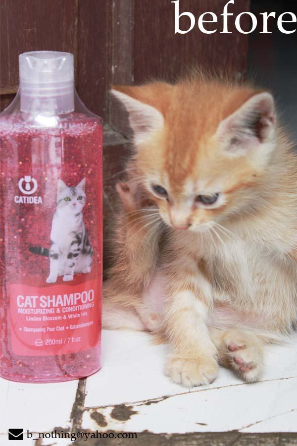 gambar review ke-2 untuk Catidea Cat Shampoo Moisturizing & Conditioning Linden Blossom & White Iris