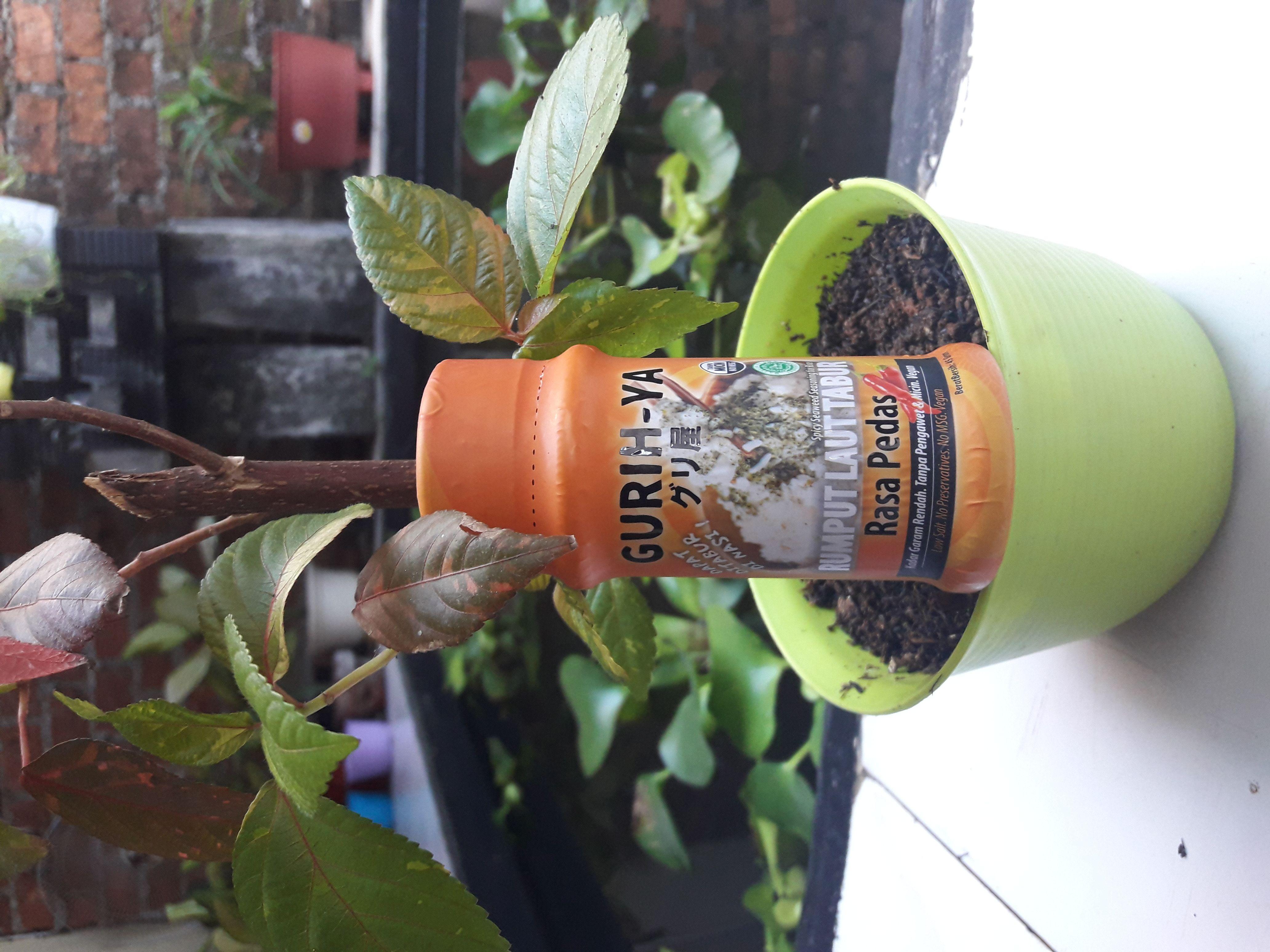 review user GURIH-YA Seaweed Seasoning Spicy